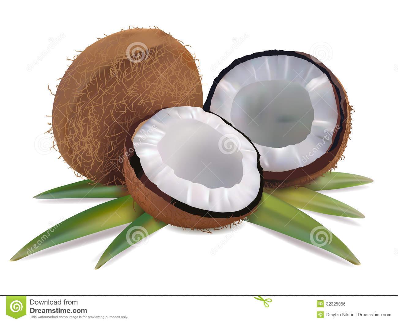 Coconut Fiber Stock Illustrations.