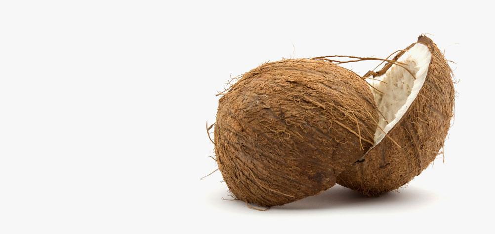 Coconut Enterprises Limited.