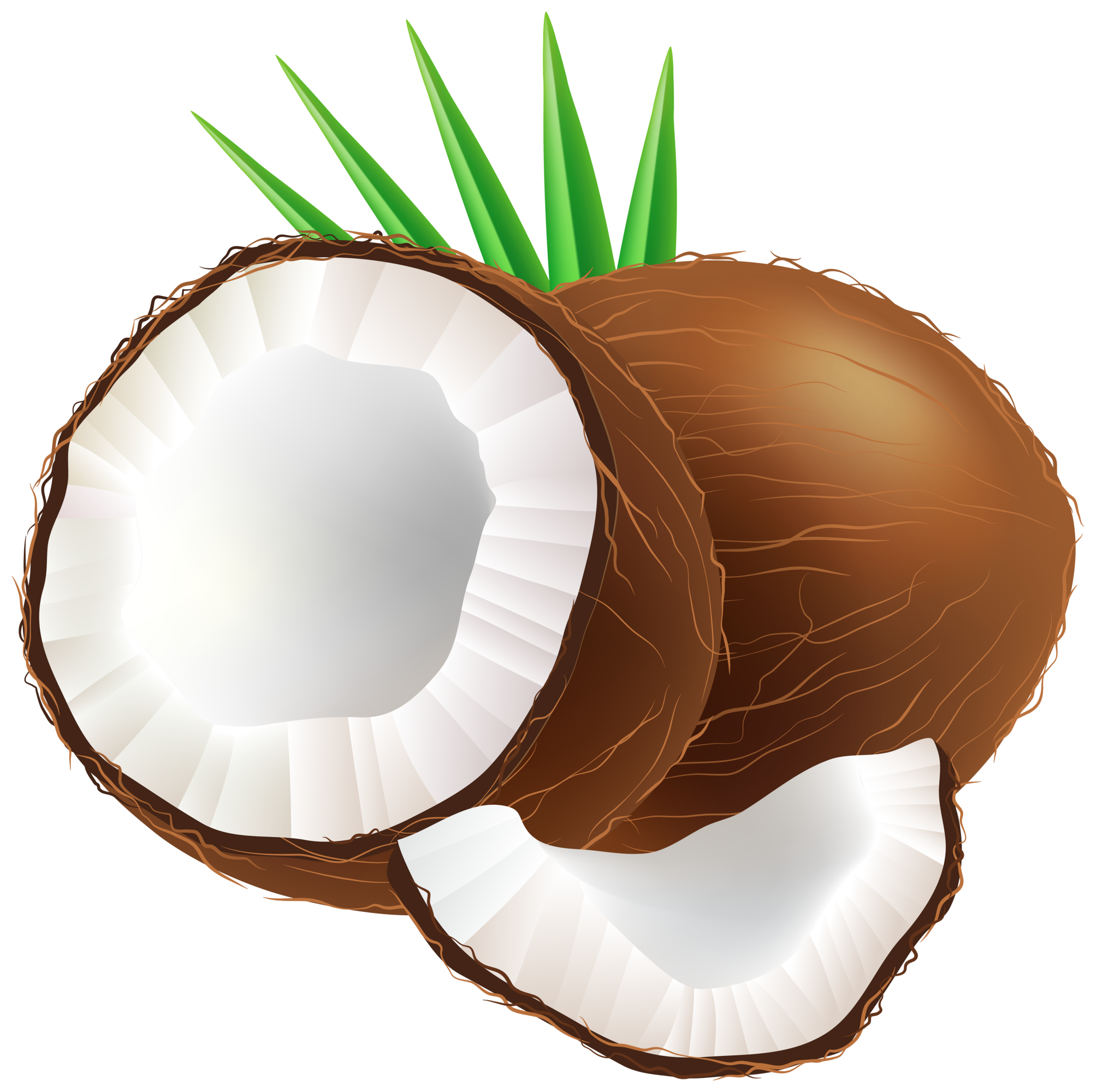 Coconut Clipart Transparent.