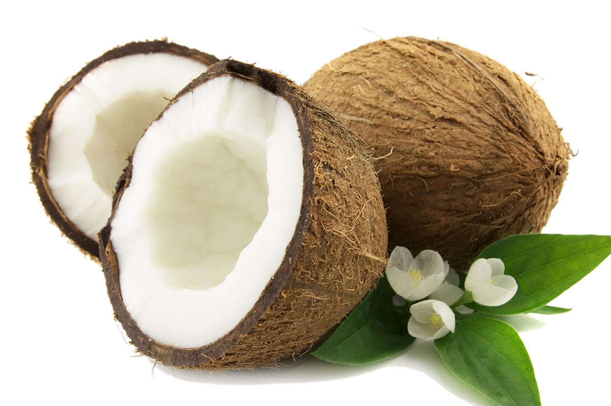 Download Coconut PNG.