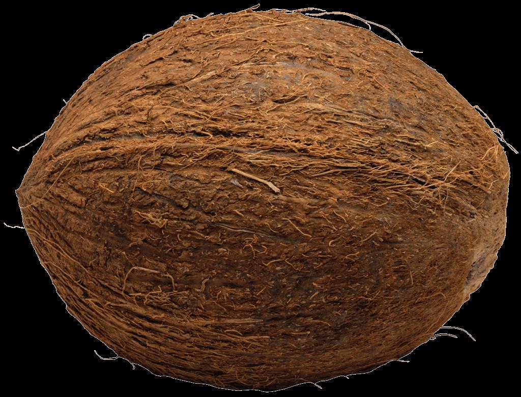 Coconut Single transparent PNG.
