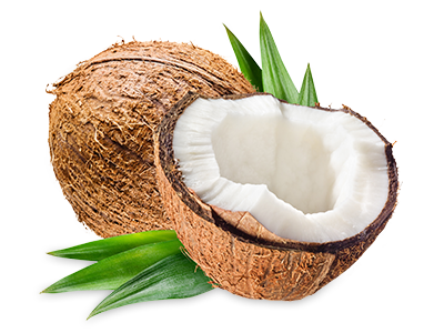 Coconut PNG Photo.