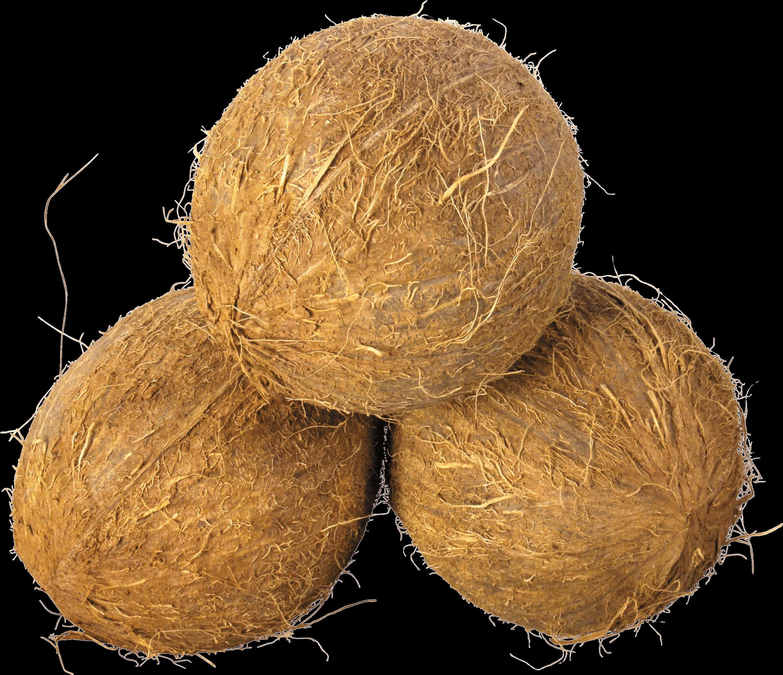 Coconut Trio transparent PNG.