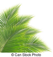 Coconut leaf Illustrations and Clip Art. 6,807 Coconut leaf.
