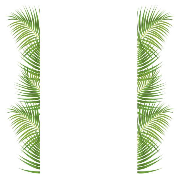 Best Coconut Leaf Illustrations, Royalty.