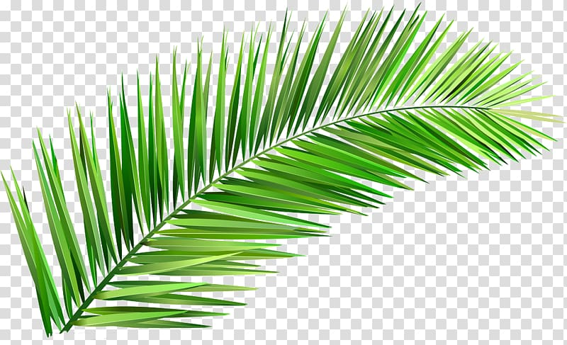 Green leaf, Arecaceae Coconut Tree Leaf Clay, Leaves transparent.