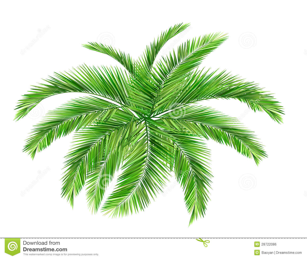 Seamless Coconut Leaves Stock Photos.