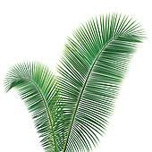 Coconut Clip Art Vector Graphics. 10,071 coconut EPS clipart.