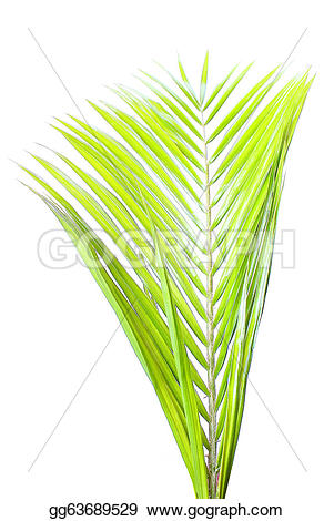 Coconut leaves clipart #5