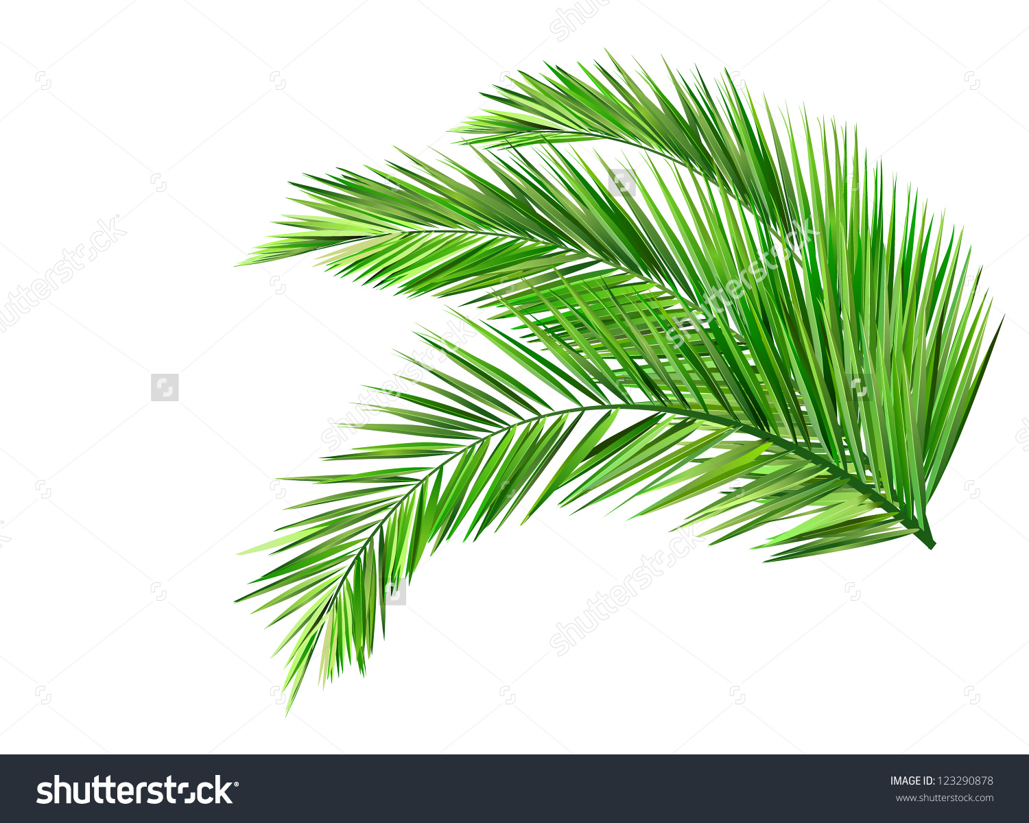 Coconut Leaves Stock Vector 123290878.