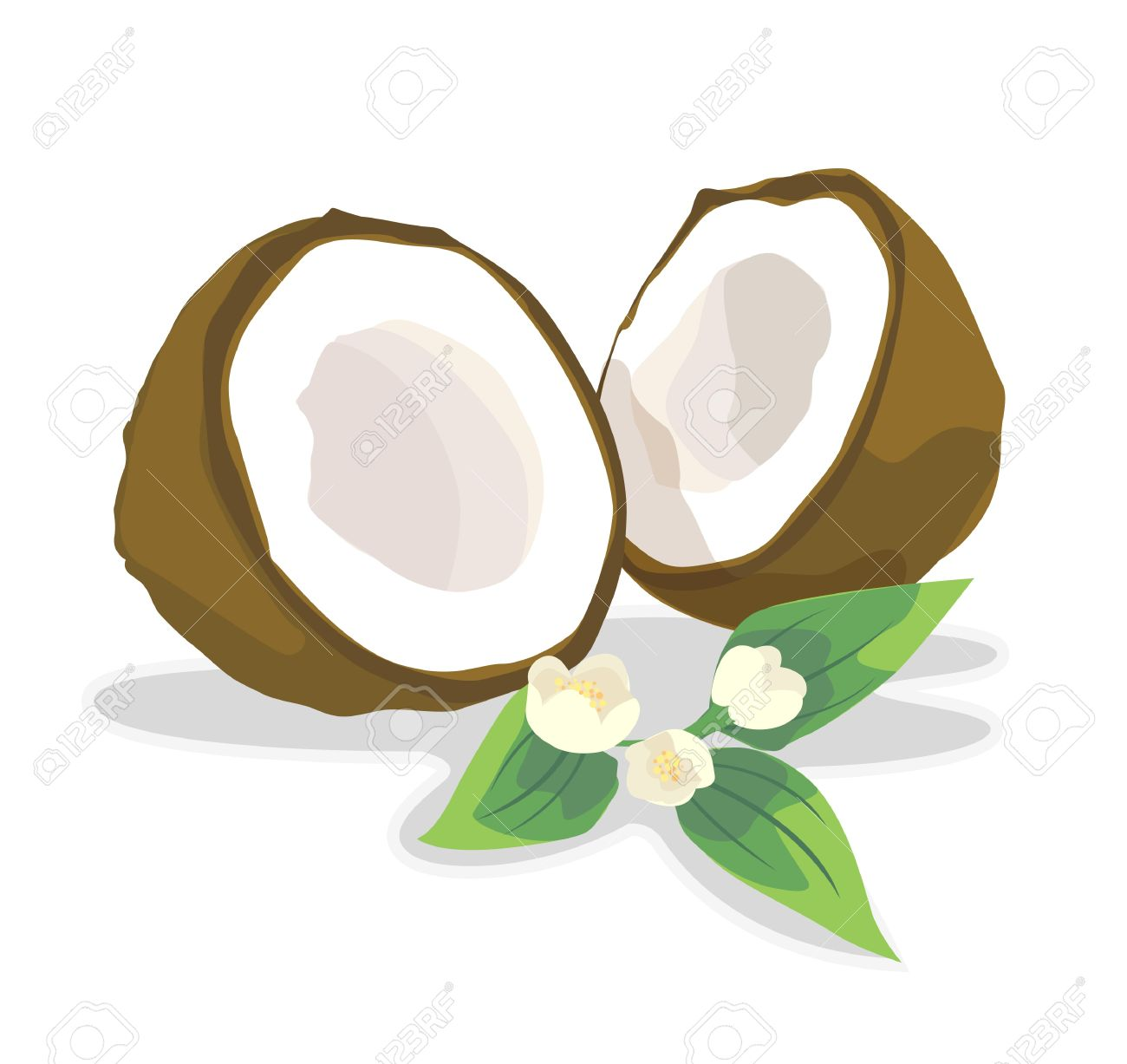 Coconut For Coconut Milk. Royalty Free Cliparts, Vectors, And.