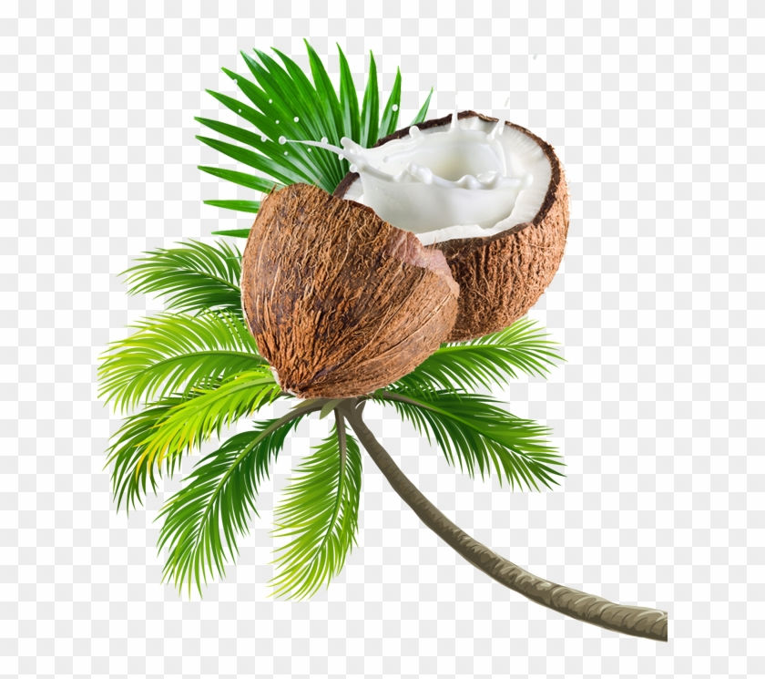 Coconut Tree Transparent Image.
