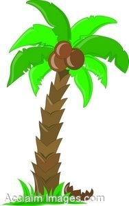 Clipart palm tree coconut.