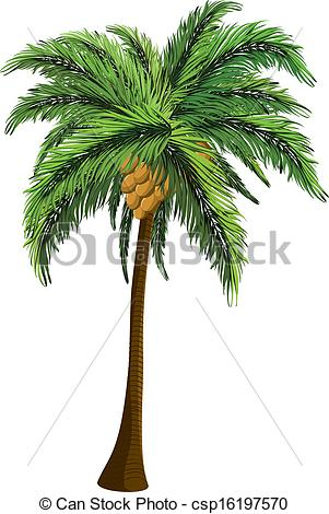 Clipart of coconut tree.