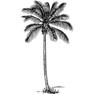 Coconut Palm Clip Art.