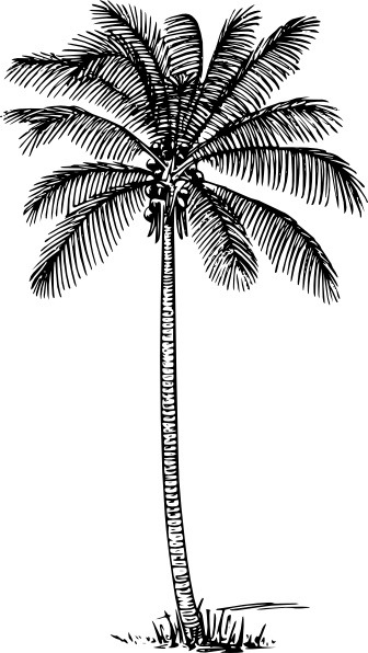 Coconut Palm clip art Free vector in Open office drawing svg.
