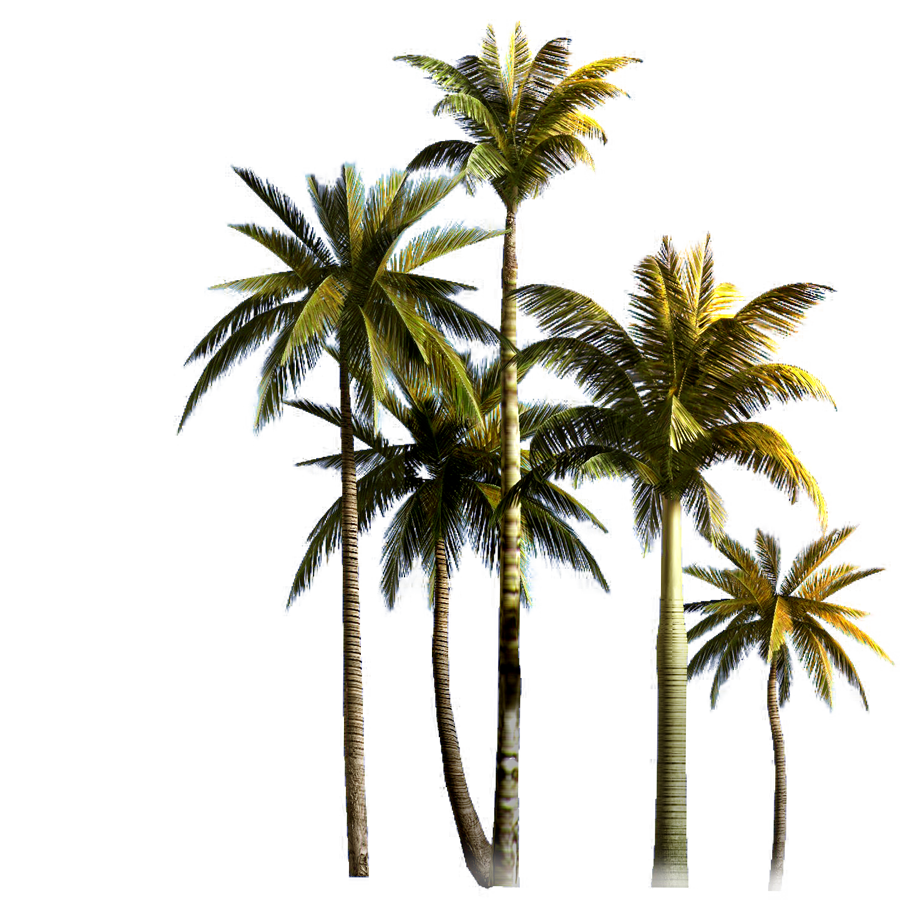 Download Coconut Grove Tree Euclidean Vector Palm Asian Clipart PNG.