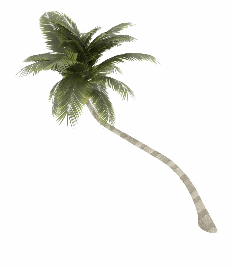 Coconut Tree Png Palm Free Download.