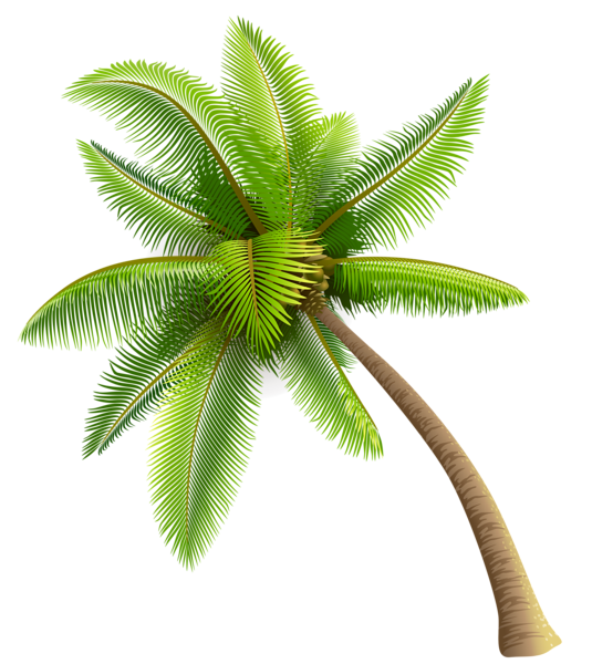 Coconut Tree PNG Images Transparent Free Download.