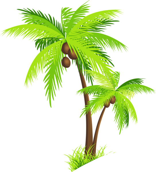 Palm Tree with Coconuts PNG Clipart Picture.