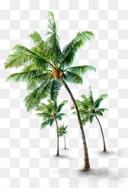 Coconut PNG Images.