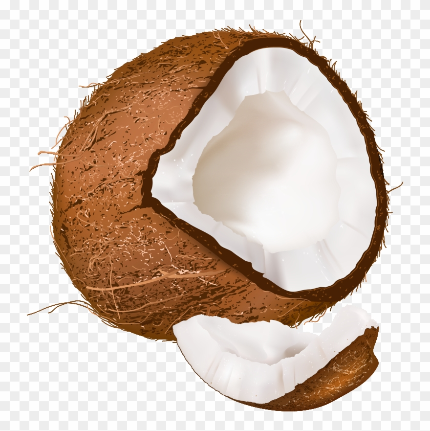 Coconut Clipart Clear Background.
