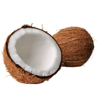 Coconut PNG Clipart.