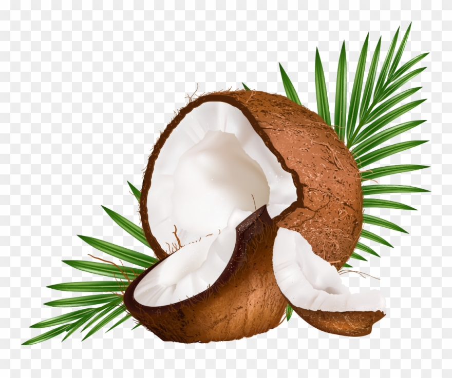 Water Euclidean Coconut Vector Milk Png Free Photo.