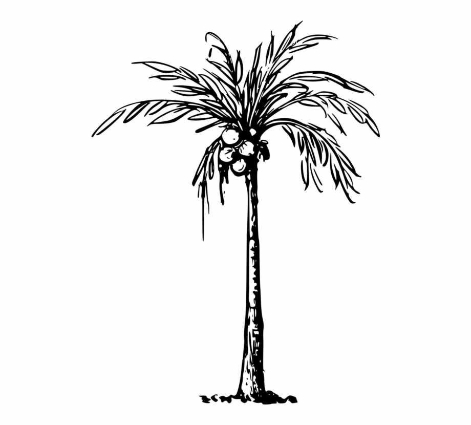 Palm Tree Drawing Palm Trees Coconut Drawing Line Art.