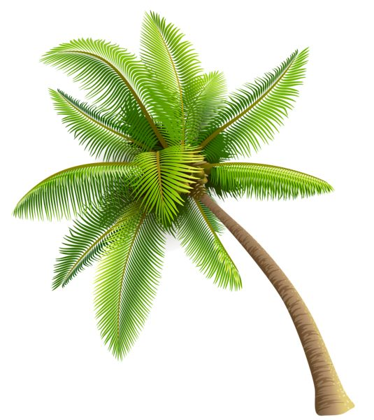 Coconut tree clipart png.