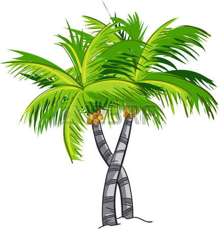 14,150 Coconut Tree Stock Vector Illustration And Royalty Free.