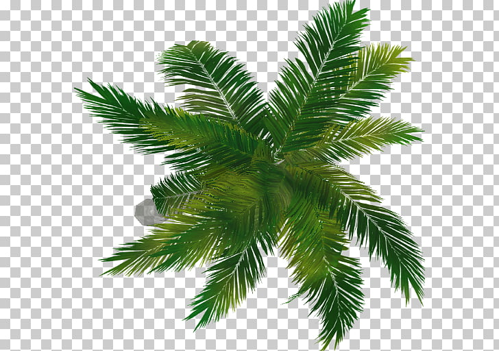 91 Sago palm PNG cliparts for free download.
