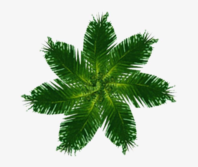 Palm Tree Plan View Png.