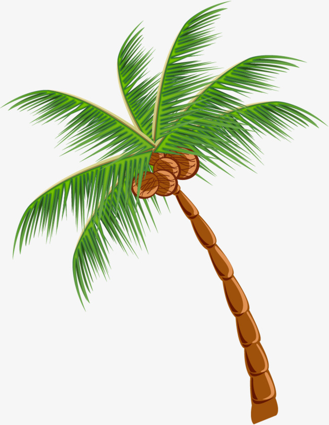 Coconut tree clipart png 1 » Clipart Station.