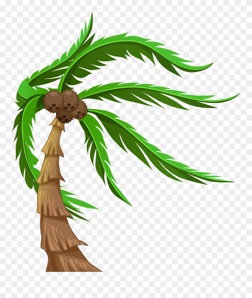 With Coconuts Transparent Png Clip Art Image.