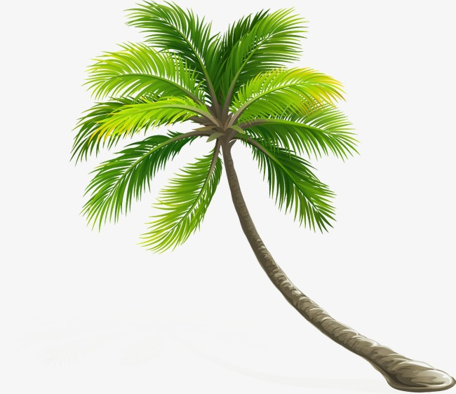 High Resolution Coconut Tree Pattern Png #46421.
