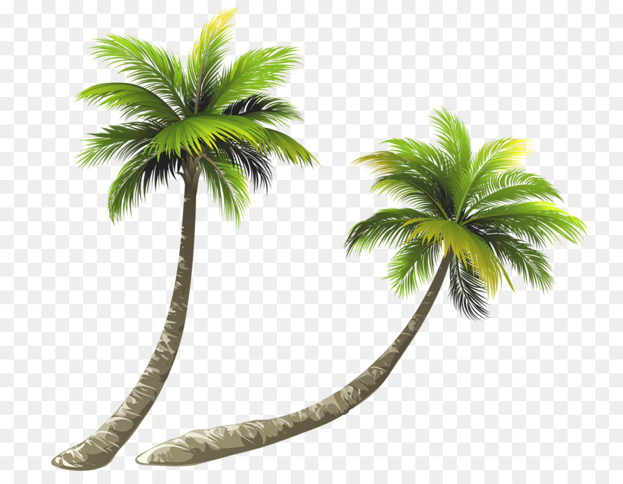 Download Free png Arecaceae Coconut Royalty free Illustration Bent.