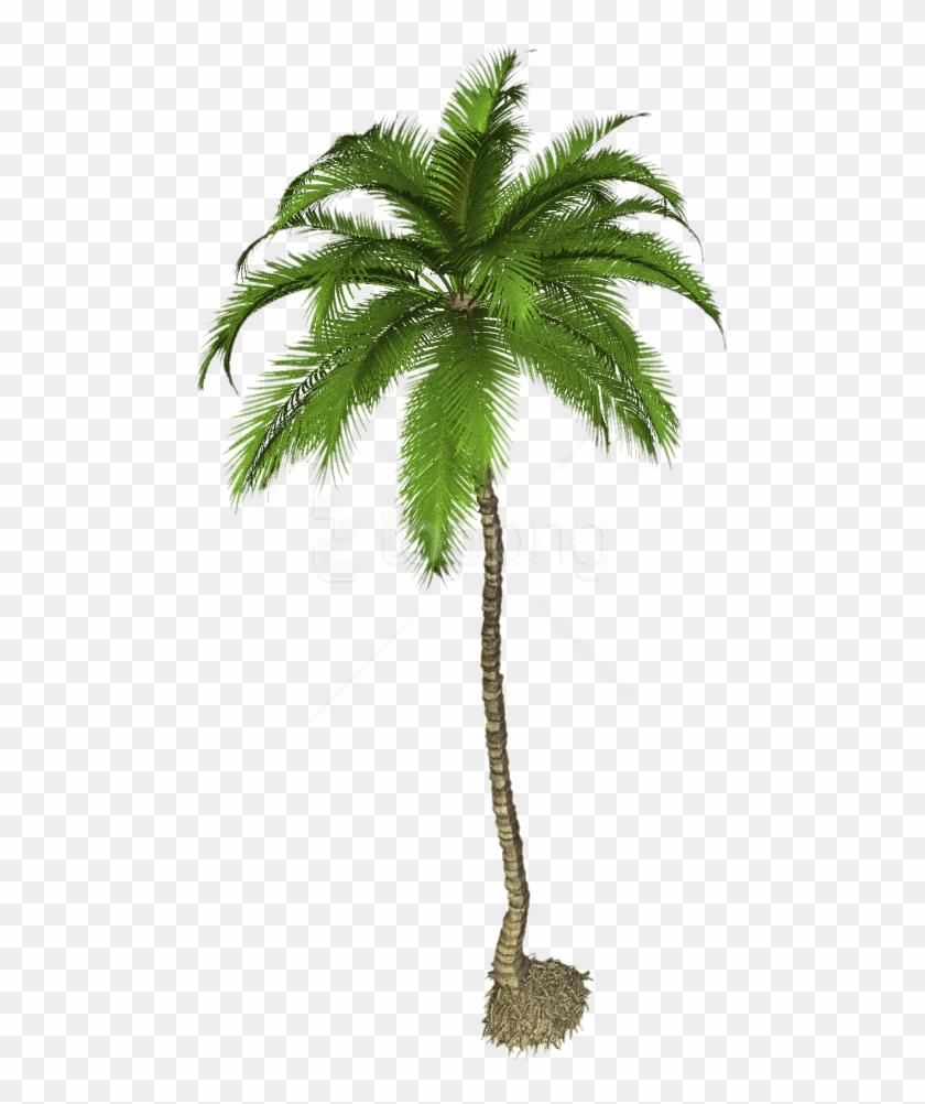 Coconut Palm Tree Png, Transparent Png.