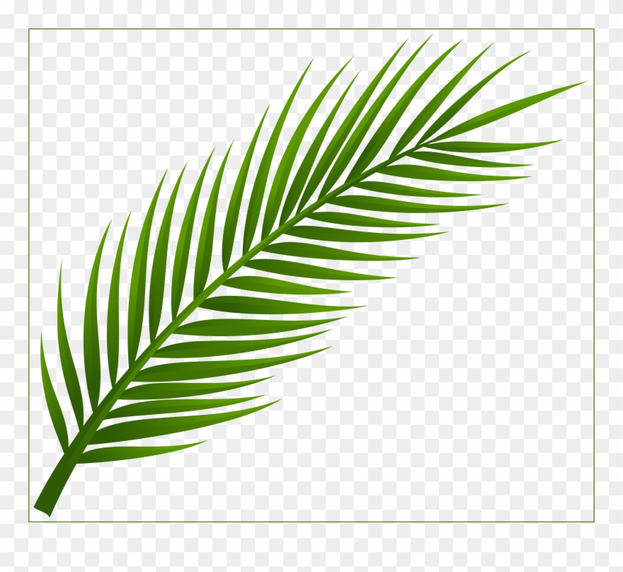 Leaf Clipart Coconut Tree.