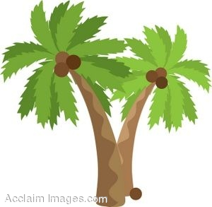 Coconut trees clipart #14