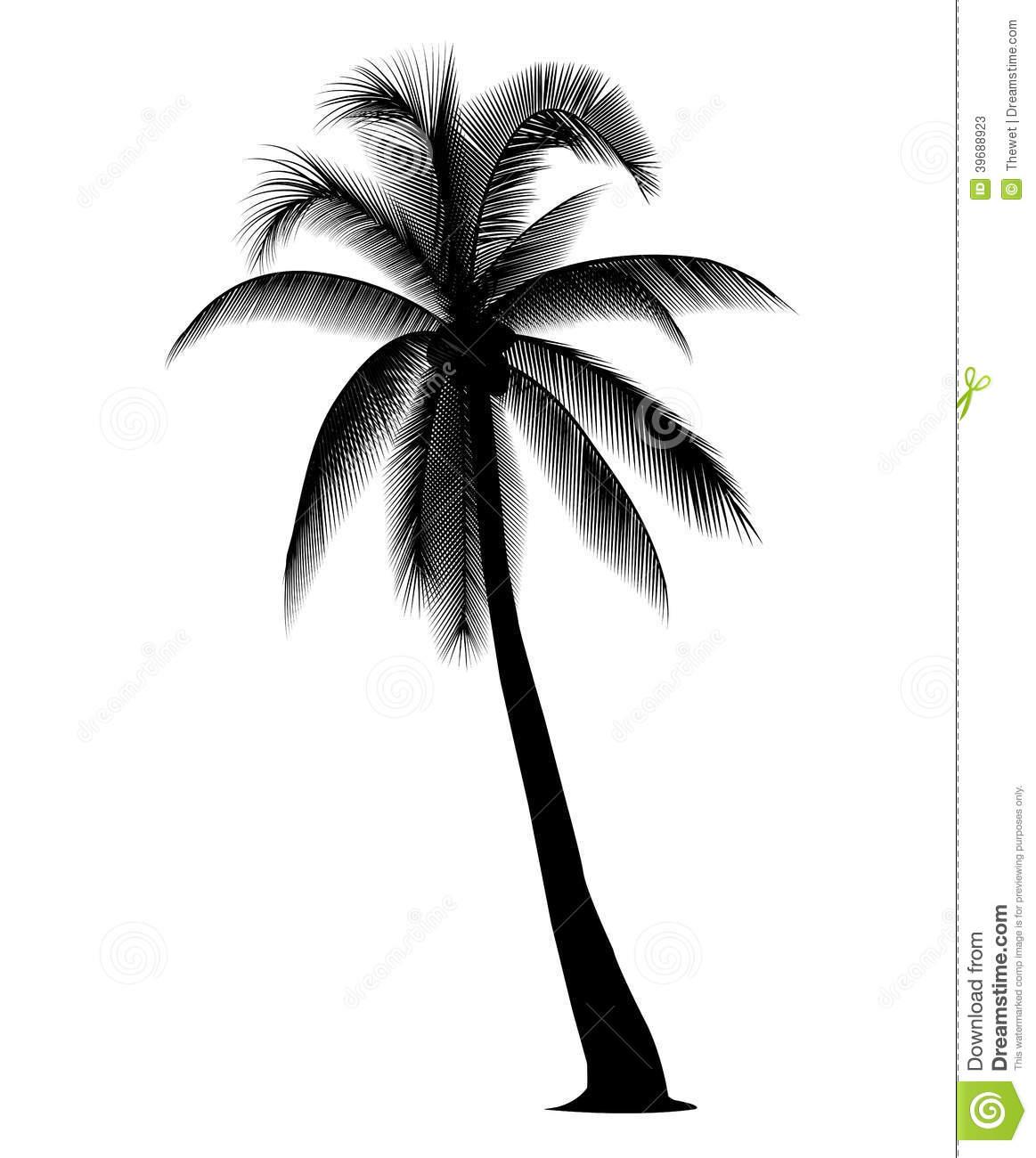 Coconut tree clipart white.