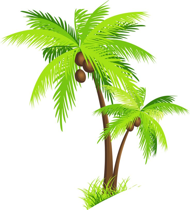 Coconut Tree PNG Clipart.