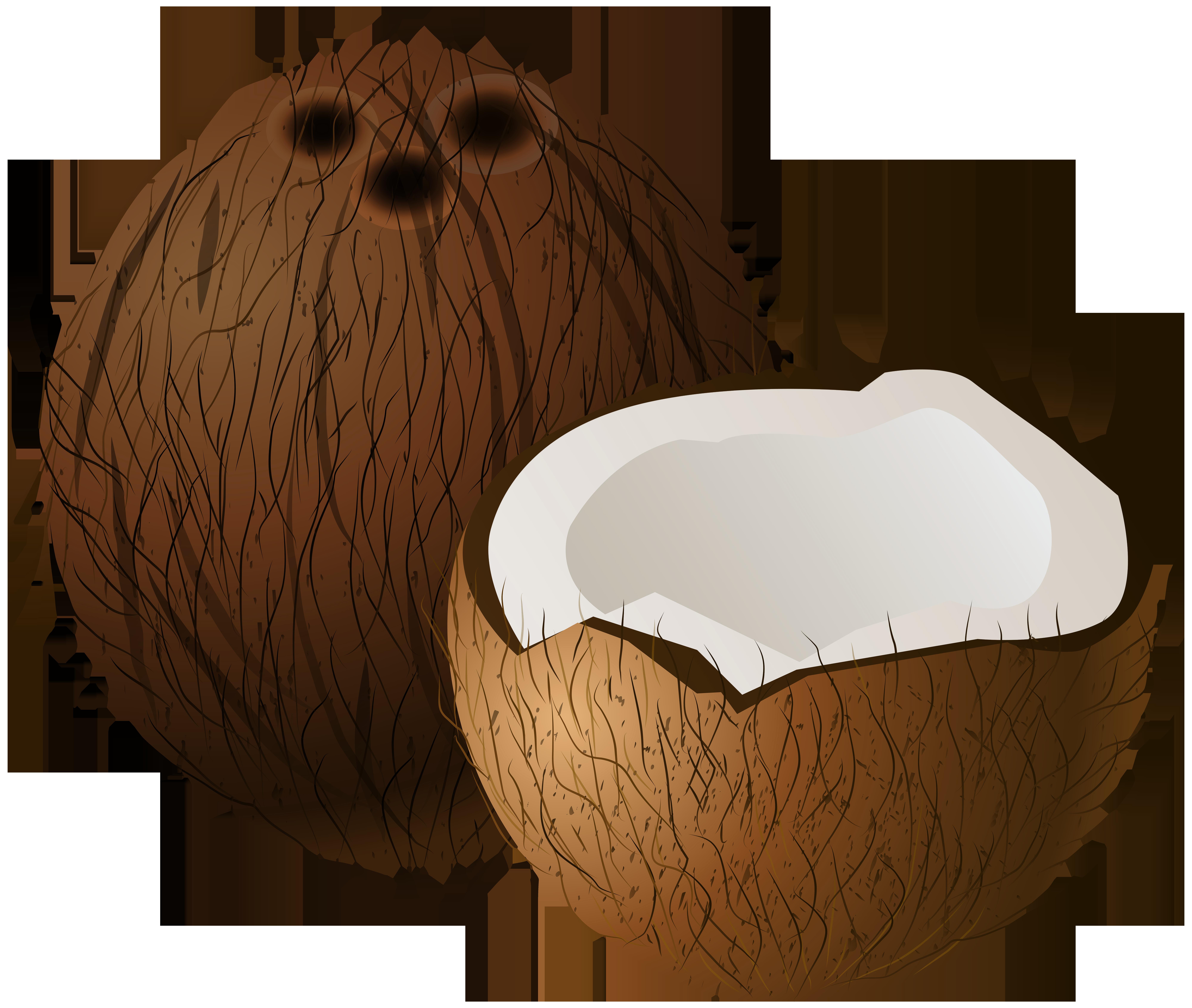 Coconuts PNG Clip Art.