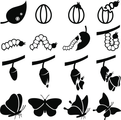 Butterfly flying from cocoon clipart.