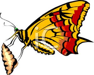 Cocoon to butterfly clipart.