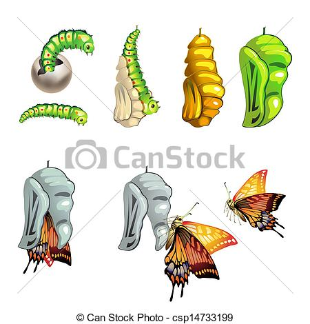 Chrysalis Illustrations and Clip Art. 104 Chrysalis royalty free.