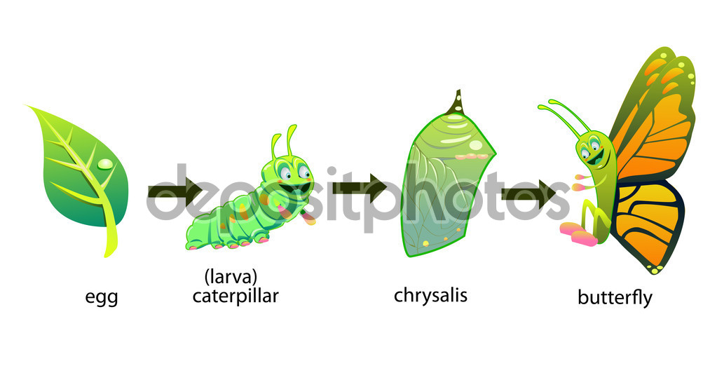 Clip art of butterfly metamorphosis — Stock Vector © kozzi2 #108793396.