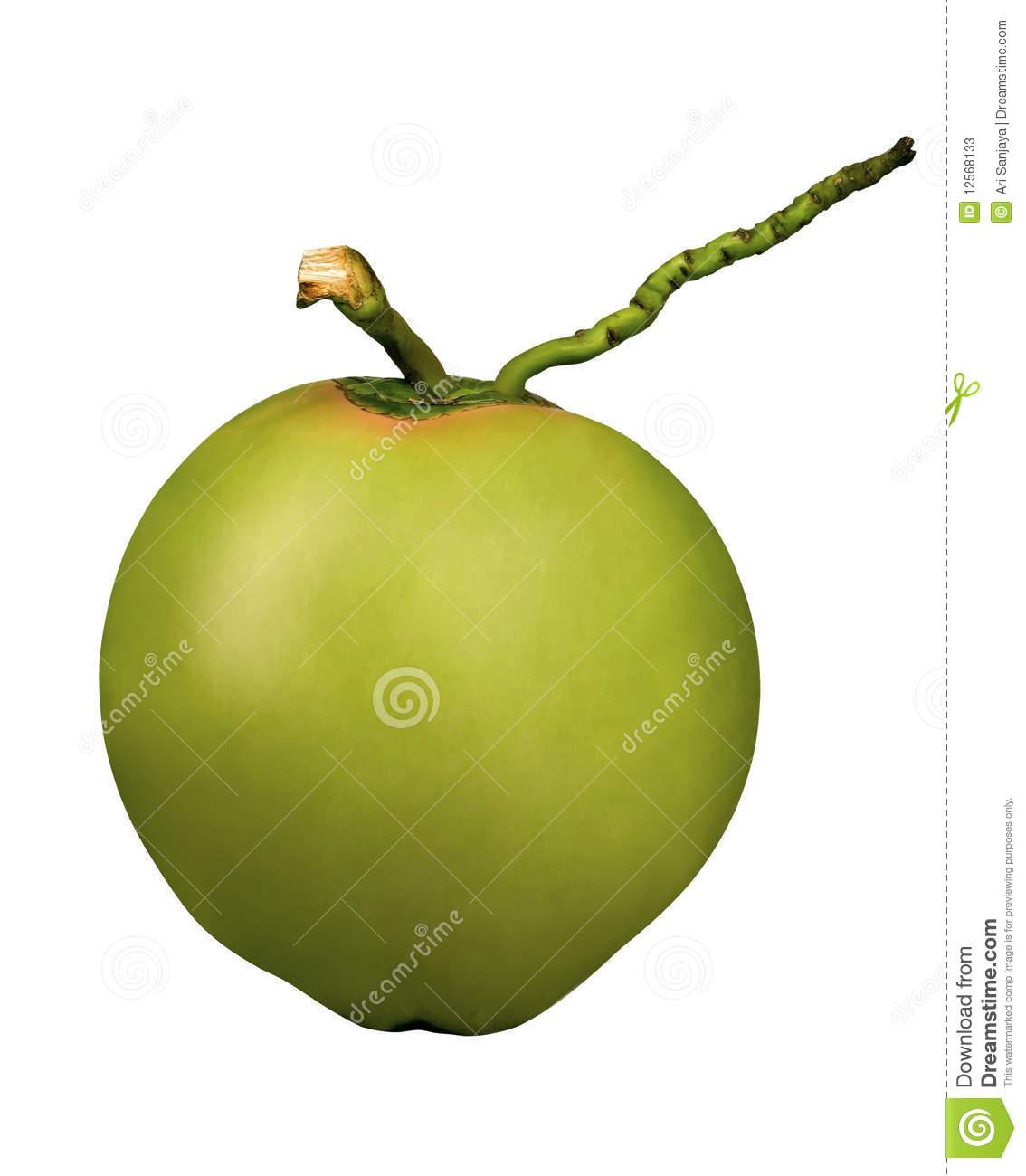 Green coconut clipart.