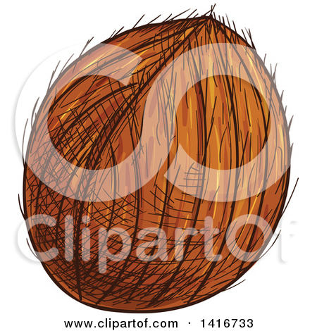 Clipart of a Sketched Coconut.