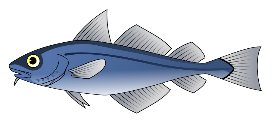 Cod Clipart.
